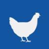 Chicken | 鸡肉
