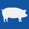 Pork | 猪肉